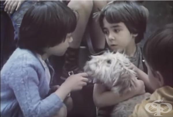 Куче в чекмедже - филм
